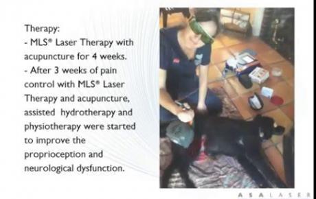Embedded thumbnail for Lexi, Labrador avec claudication chronique et grave parésie