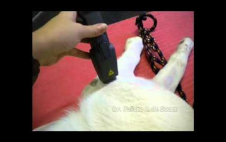 Embedded thumbnail for Labrador Retriever mit bilateraler Arthrose des Ellenbogens