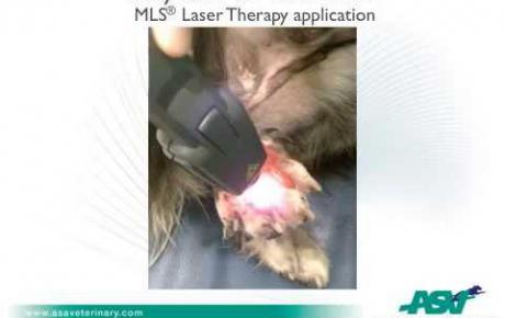 Embedded thumbnail for Mixed breed with trauma wounds