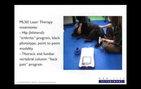 Embedded thumbnail for Perseo, labrador avec difficulté de mouvement