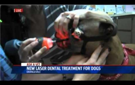 Embedded thumbnail for Fox40 | Dental MLS® Laser Therapy for dogs