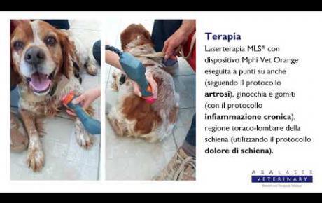 Embedded thumbnail for Rocky, cane con displasia alle anche e zoppia di 2°-3° grado
