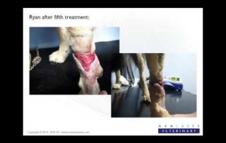 Embedded thumbnail for Ryan, Behandlung einer traumatischen infizierten Wunde