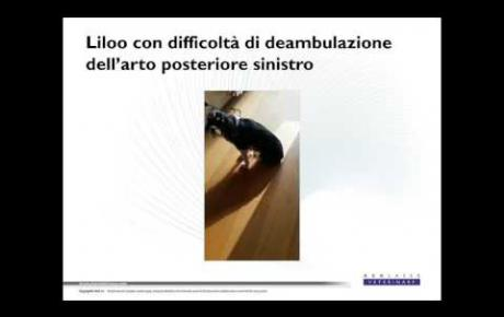 Embedded thumbnail for King Charles Cavalier Spaniel con lesione al nervo sciatico
