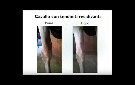 Embedded thumbnail for Grey, Cavallo con tendiniti recidivanti