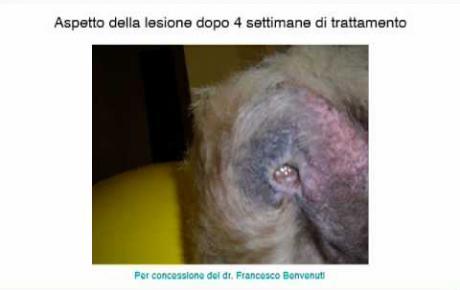 Embedded thumbnail for Meticcio con ulcere da decubito